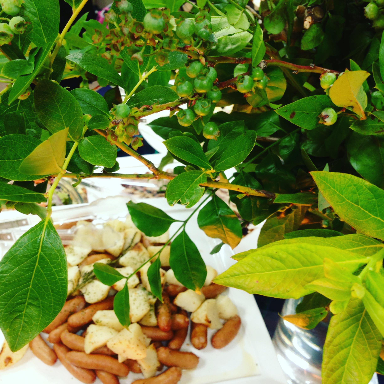 季節の枝での装飾